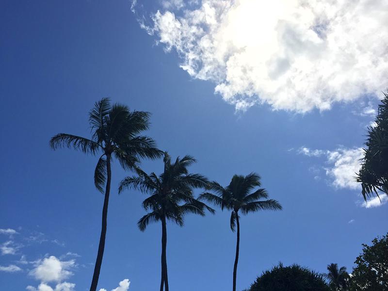 ハワイといえばこれ